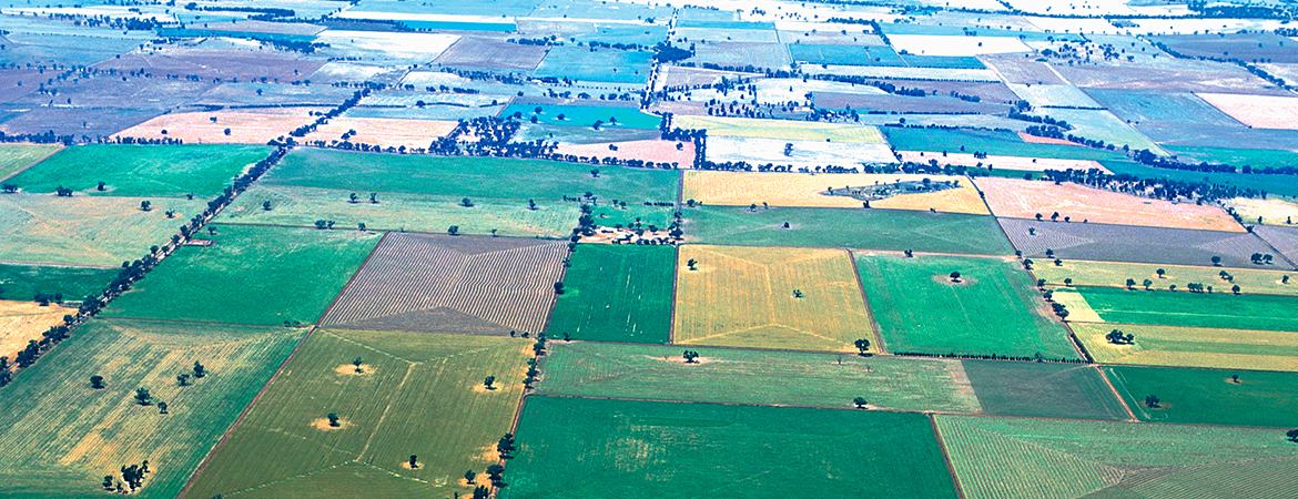Aerial view of mixed crops