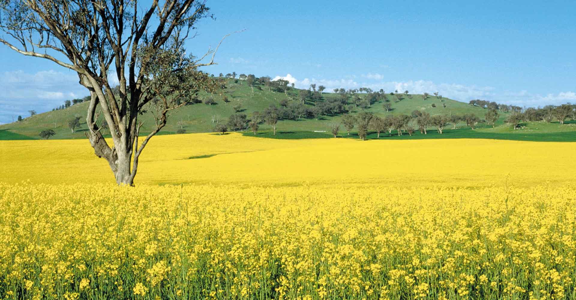 Agricultural farming crop.