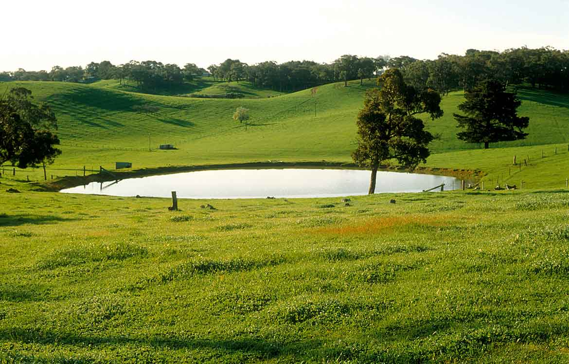 Green pasture with water dam.