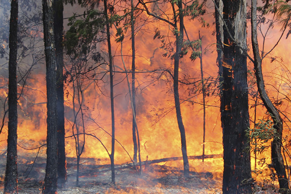 Fire burning through wooded bushland