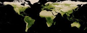 Global vegetation index satellite map
