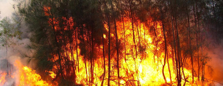 Bushfire burning fiercely in trees