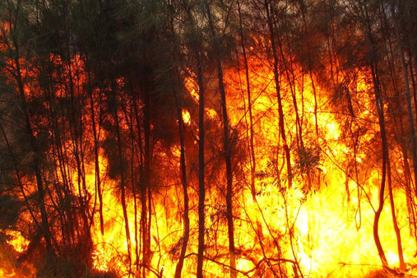 Bushfire burning fiercely in trees