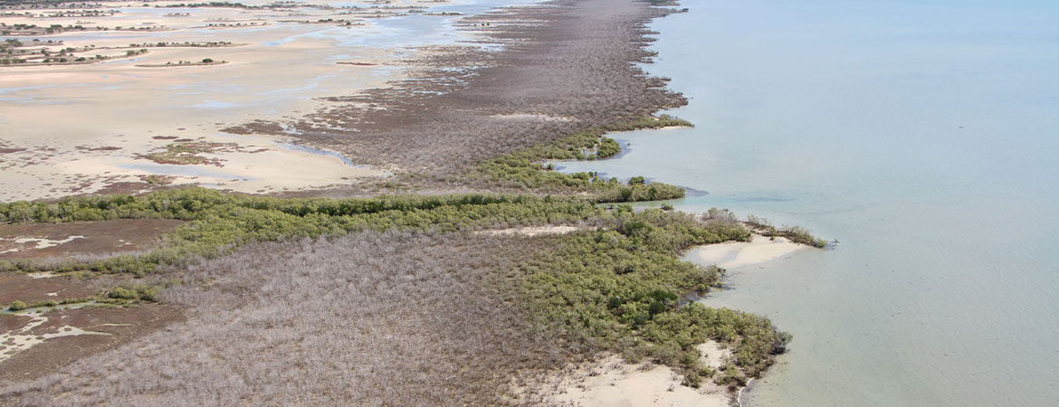 Aerial view of mangrove dieback in the Gulf of Carpentaria