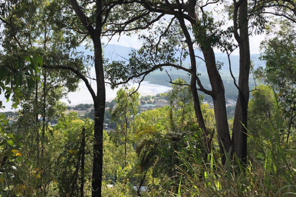 Looking through trees to Yarrabah