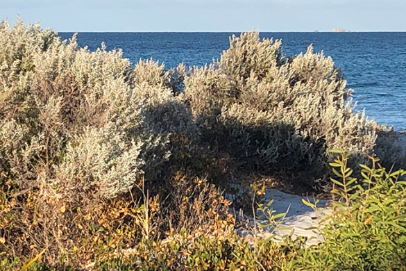 Vegetation on a beach with the water in the background
